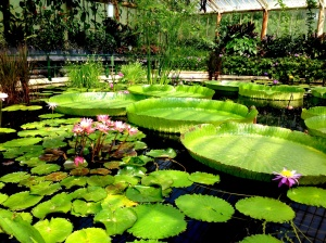at the Waterlily House, Kew Gardens